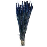 Spice de grau albastre vopsite